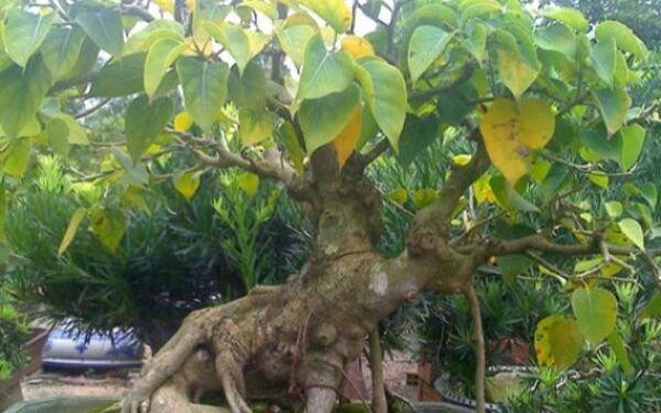 Nên trồng cây gì ở nhà thờ họ hợp phong thủy nhất